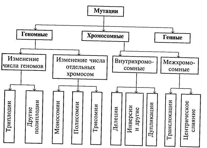 Схема типов мутаций