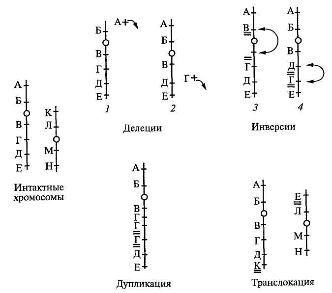Схема наиболее частых типов