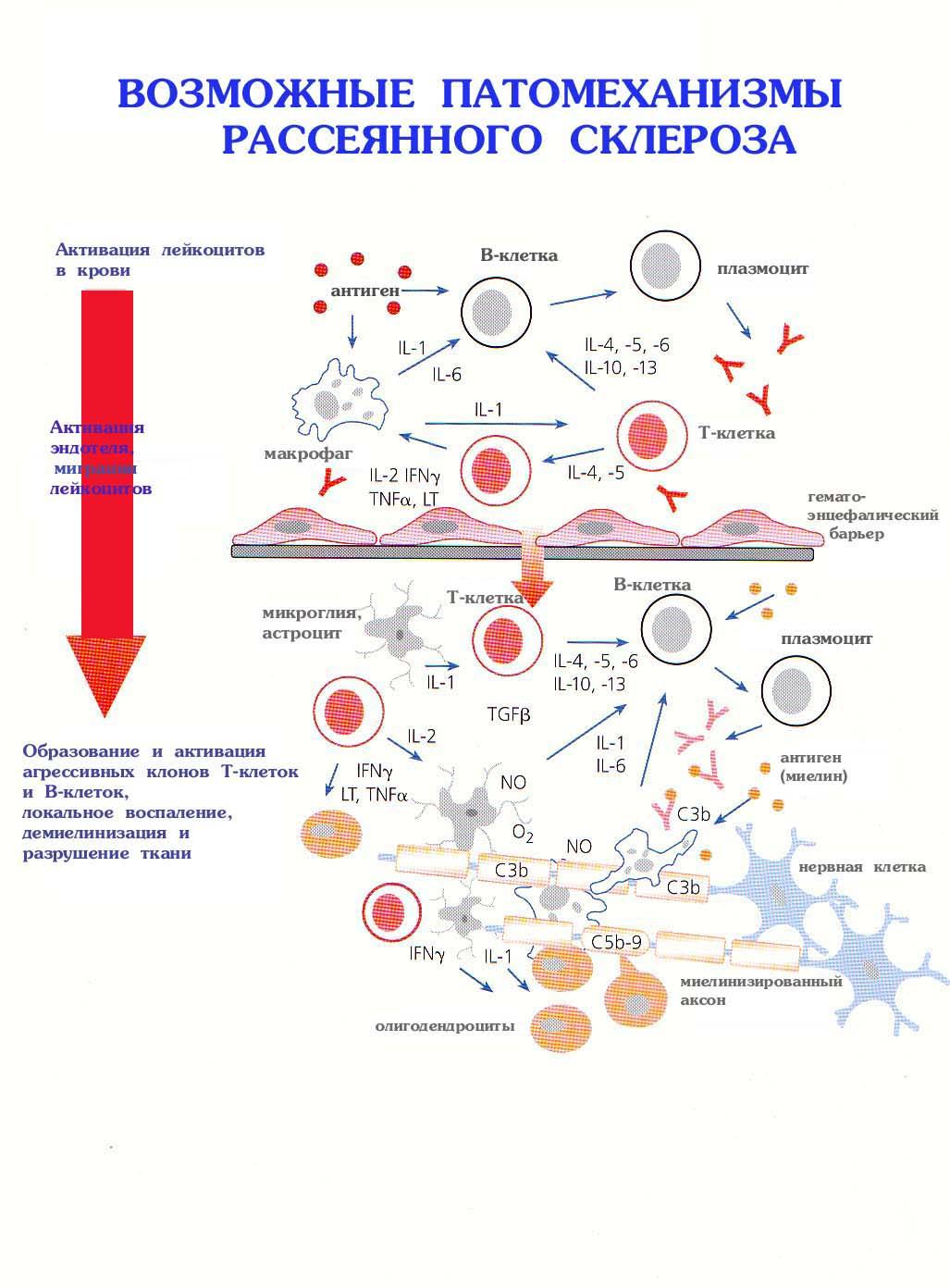 Дексаметазон схема приема при рассеянном склерозе
