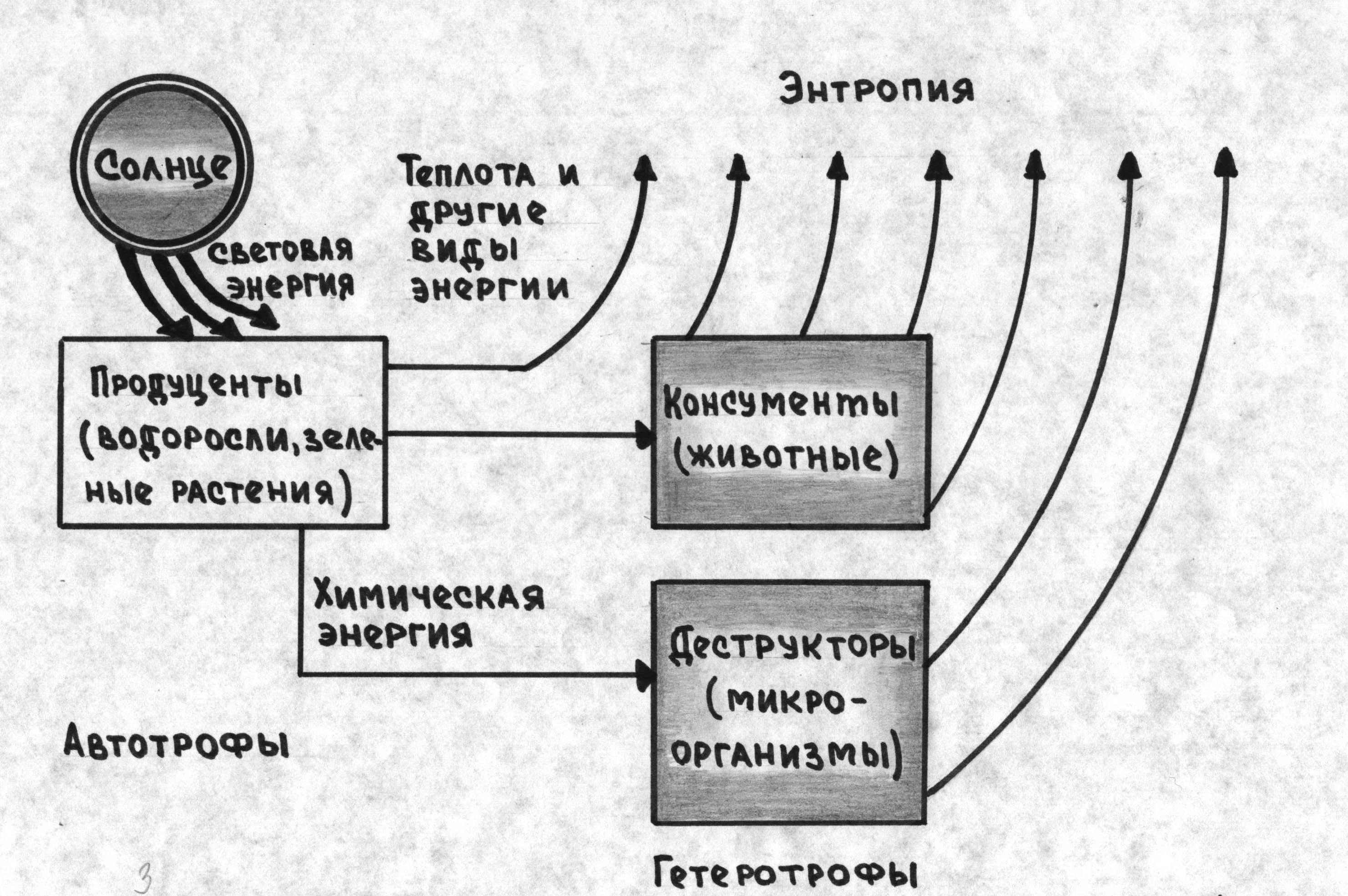 поток энергии в экосистемах схема
