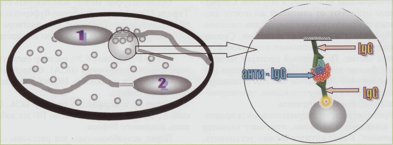 tehnika-podscheta-spermatozoidov